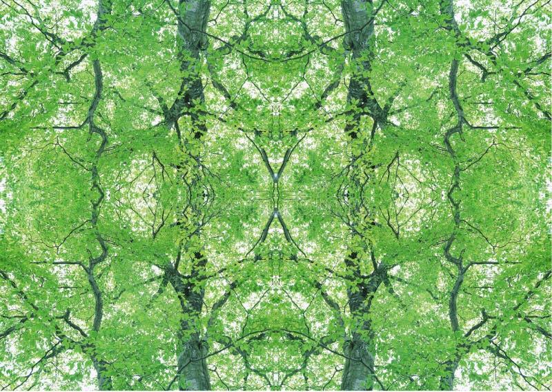 Grön textur | Blom- modell | Designbeståndsdel | Texturerad bakgrund royaltyfria foton