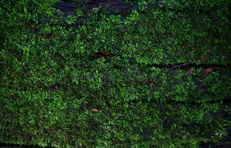 Grön textur för mossalavbakgrund som är härlig i natur med Co arkivfoto
