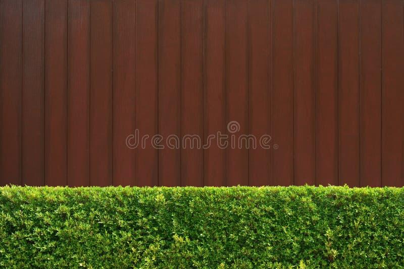 Grön textur för trädväggstaket royaltyfri foto