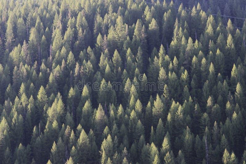 Grön trädblast på solnedgången i bergen royaltyfria foton
