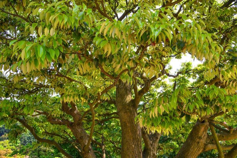 Grön trädskog arkivbild