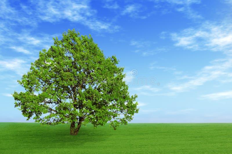 grön tree för fält arkivfoto