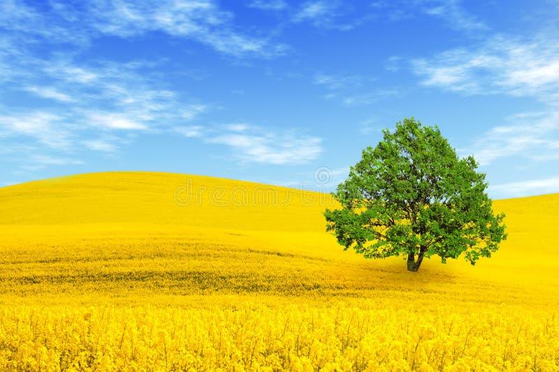 grön tree för fält arkivbild