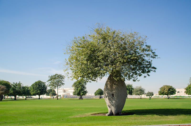 Grön tree i parken royaltyfri foto