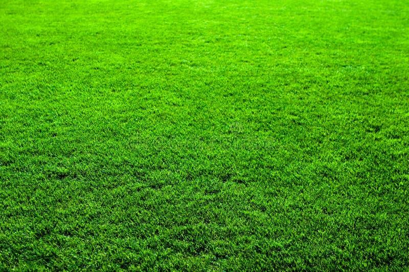grön trevlig textur för gräs arkivfoto
