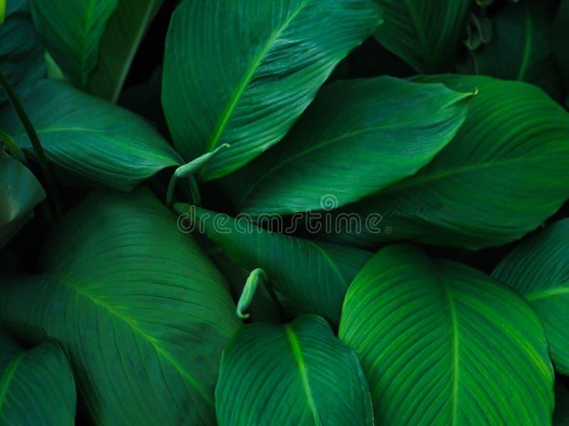 Grön tropisk sidamodellbakgrund, naturlig bakgrund och tapet arkivfoto