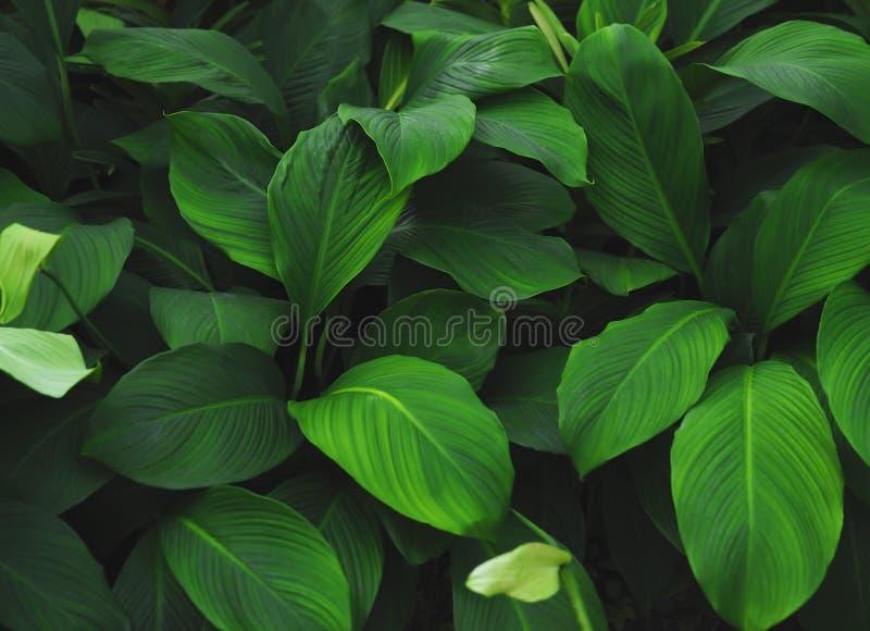 Grön tropisk sidamodellbakgrund, naturlig bakgrund och tapet royaltyfri fotografi