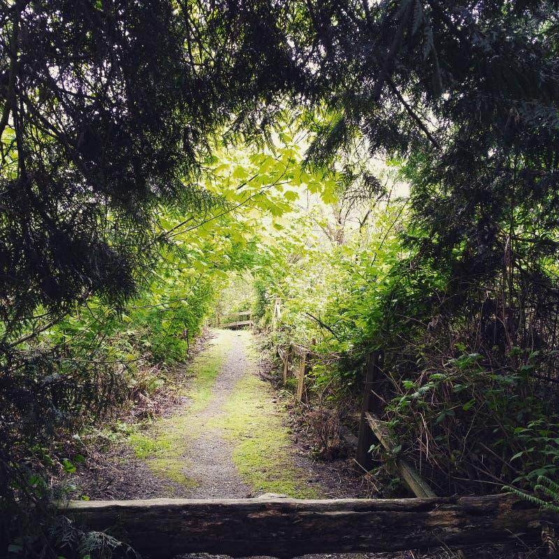 grön tunnel royaltyfri bild