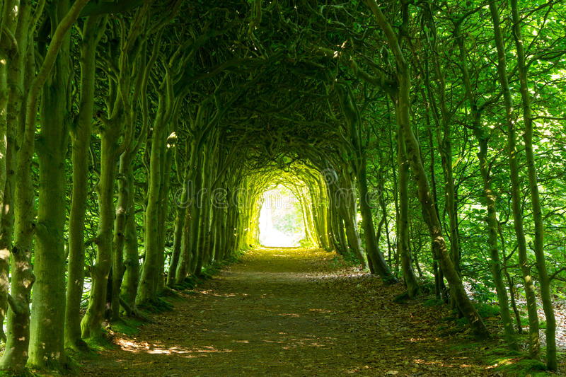 grön tunnel royaltyfri foto
