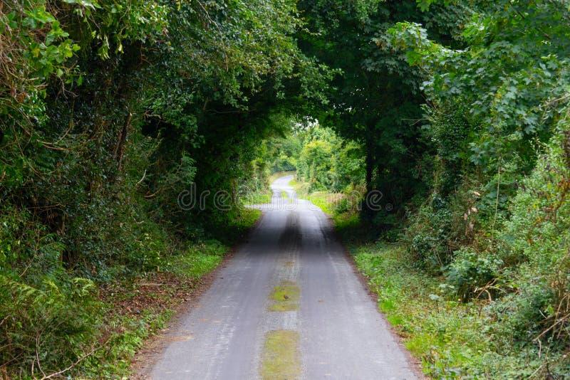 Grön tunnel i Greenwayrutt från Castlebar till Westport royaltyfria bilder
