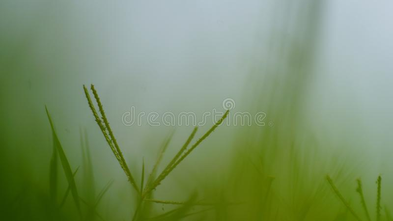 Grön tyst ensamhet royaltyfri fotografi