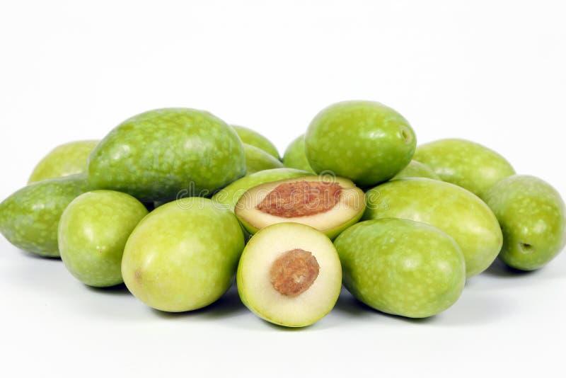 Grön ung oliv royaltyfri fotografi