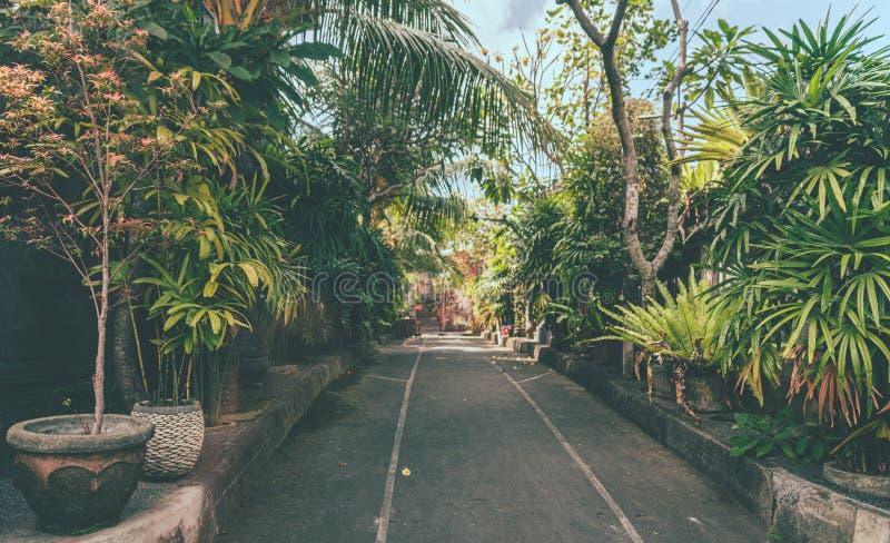Grön väg till sanering av giftig mark i bali royaltyfria foton