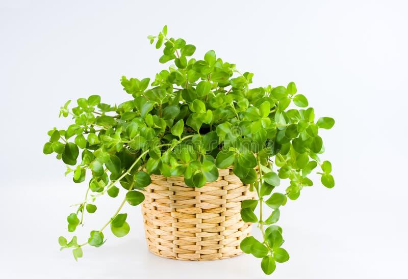 grön växt arkivfoto