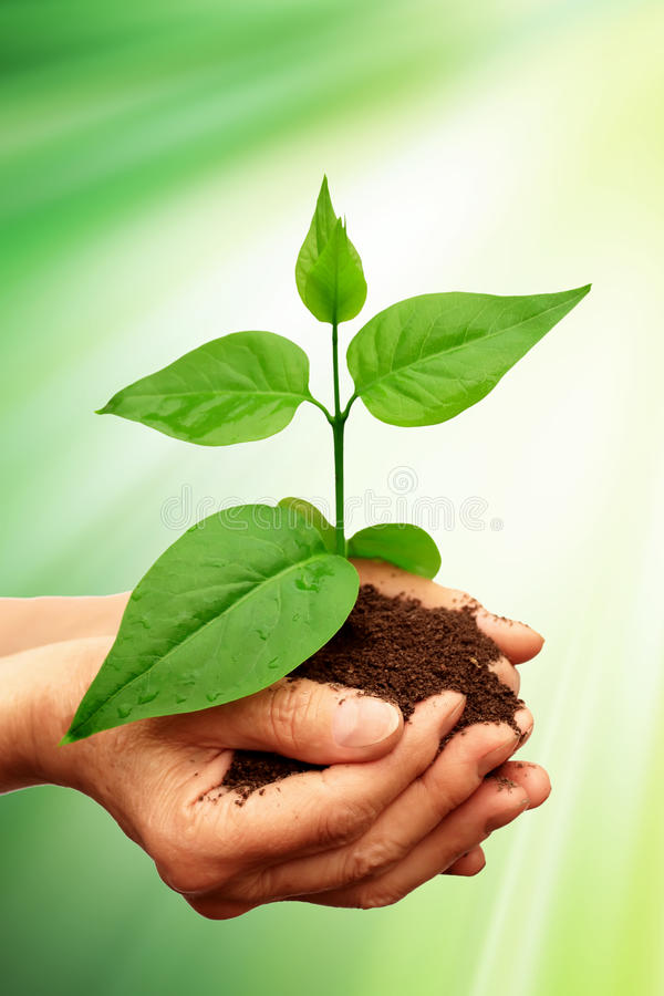 grön växt royaltyfria foton