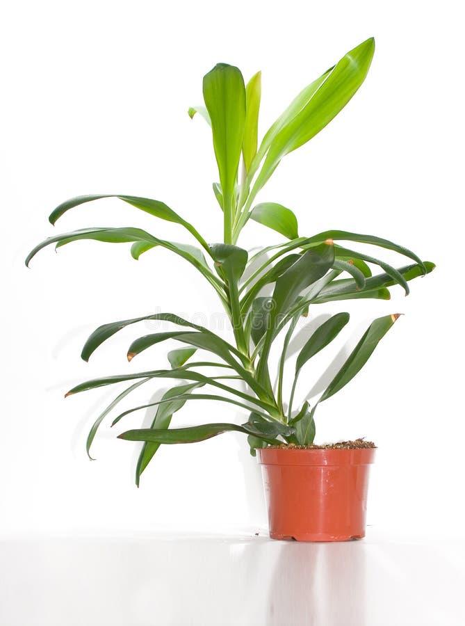 Download Grön växt fotografering för bildbyråer. Bild av natur, trädgård - 285039