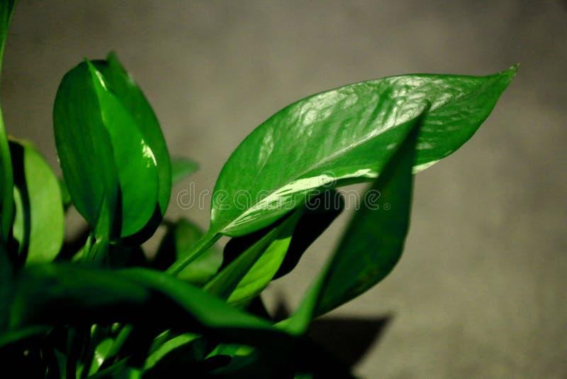 Grön växt 5 royaltyfri fotografi