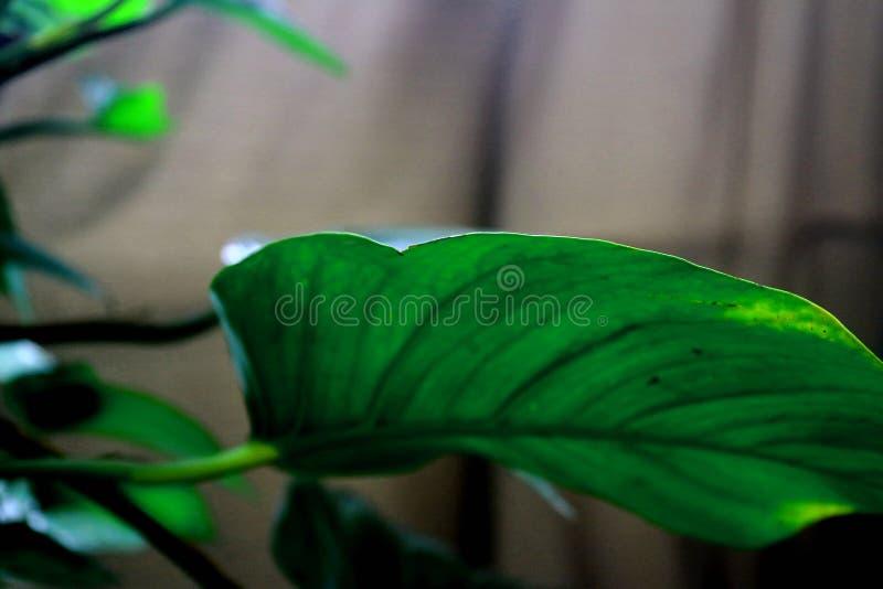 Grön växt 4 fotografering för bildbyråer