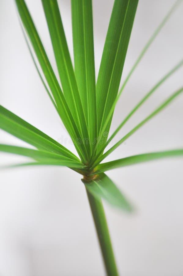 grön växt för bakgrund arkivbild