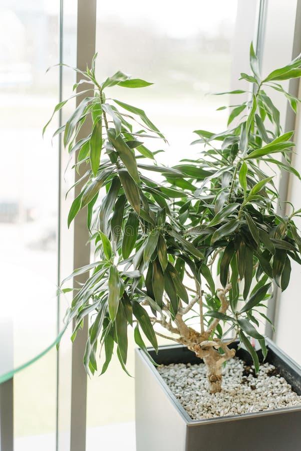 Grön växt i coferencekontorskorridor royaltyfri fotografi