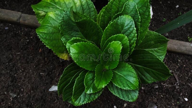 Grön växt i gården arkivbild