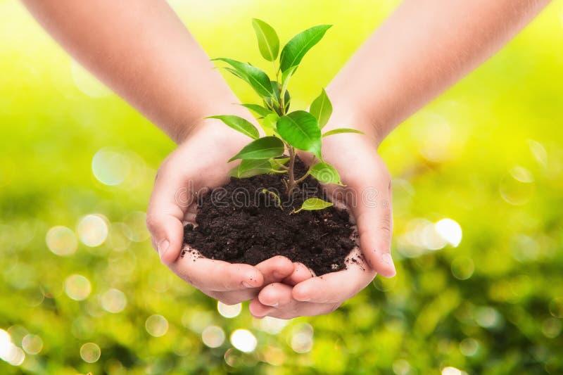 Grön växt i händer för ett barn royaltyfri bild