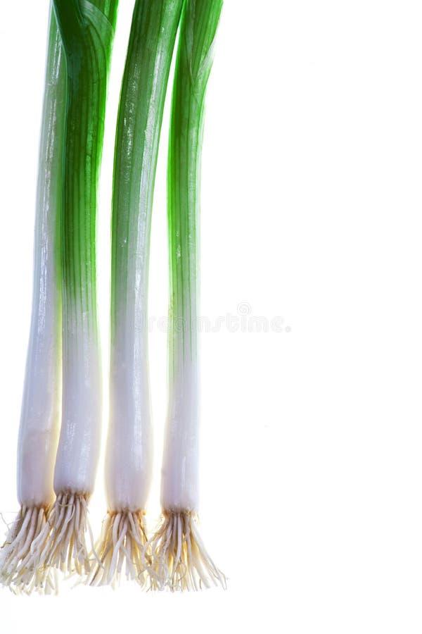 Grön vårlök på vit bakgrund arkivbild