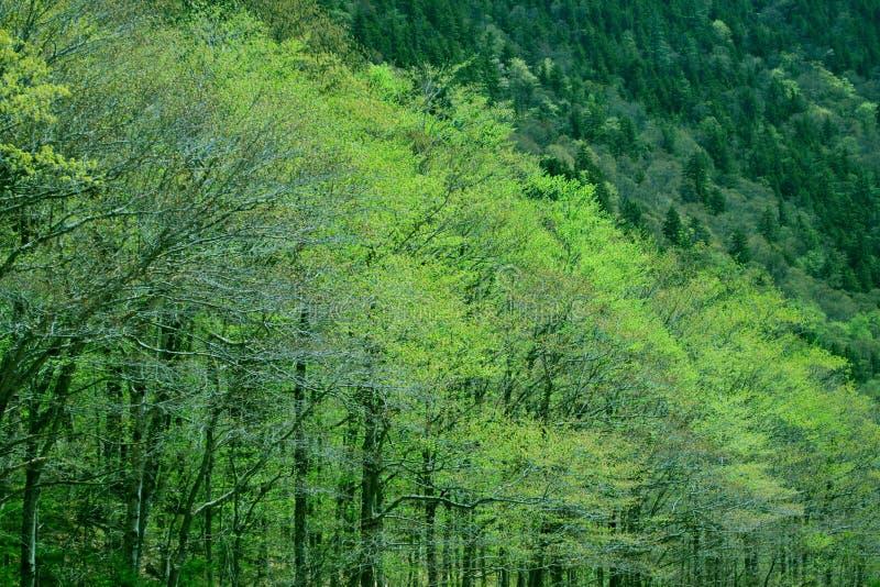 Grön vårlövverk New Hampshire royaltyfri foto