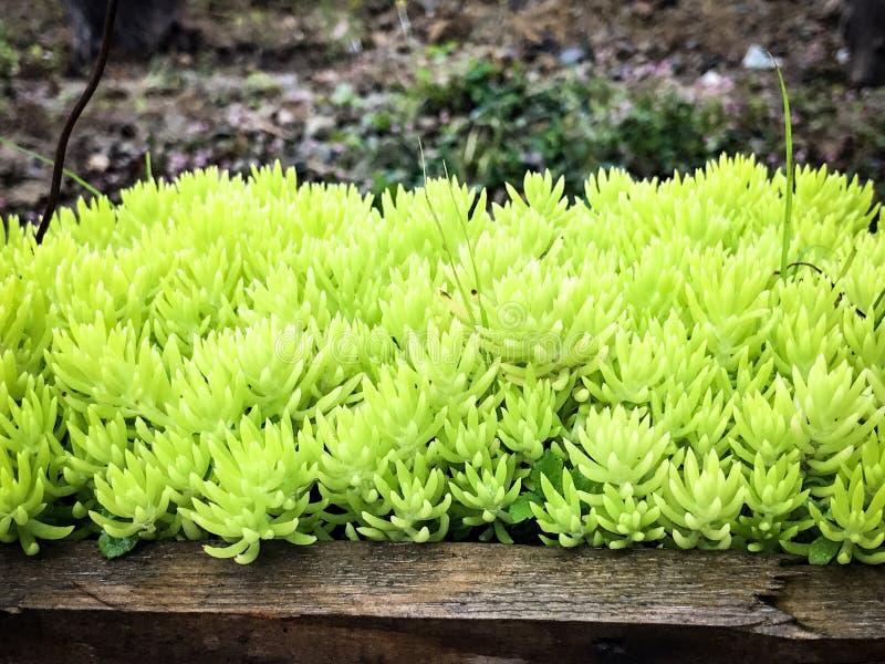 Grön vegetation i trädgården fotografering för bildbyråer