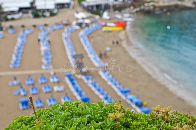 Grön vegetation och en strand i sommartid royaltyfri foto