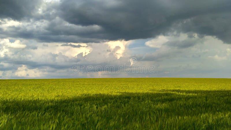 Grön veteåker mot bakgrunden av en stormig sky_5 royaltyfria bilder