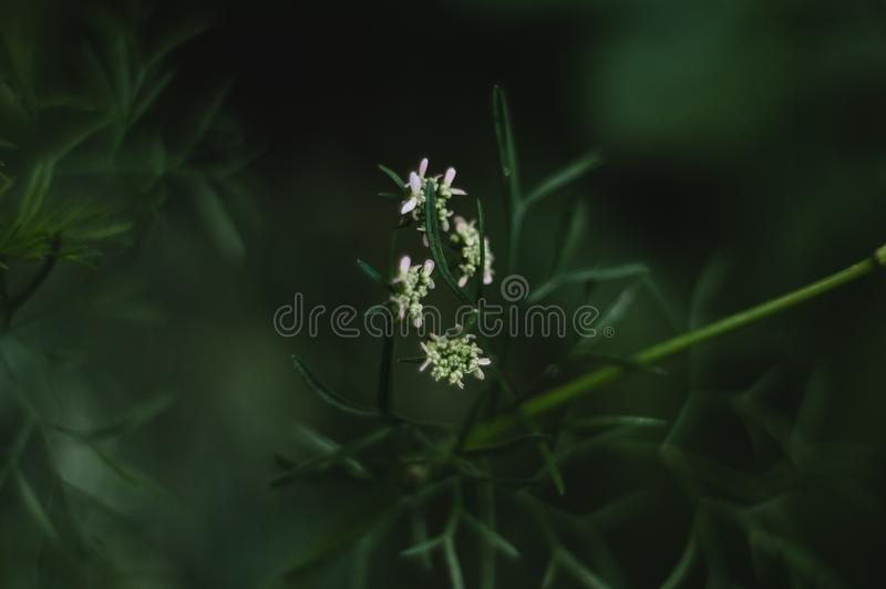 Grön vit blomma royaltyfri foto