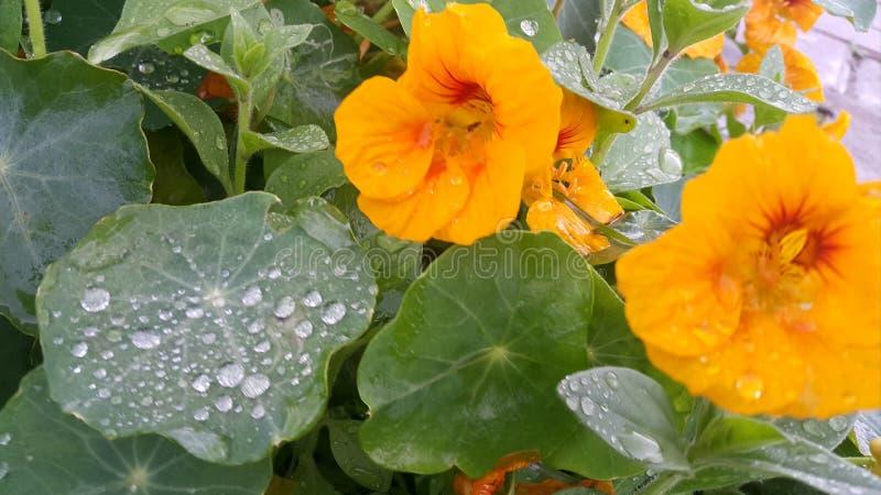 grön yellow för blommor royaltyfria bilder