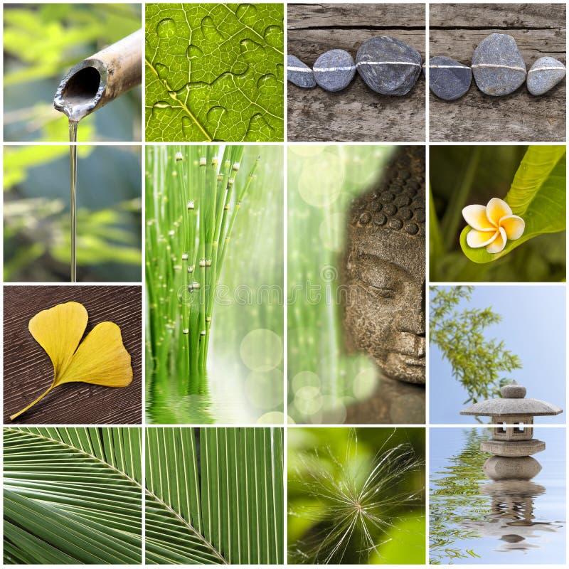 Grön zenasia collage royaltyfri foto