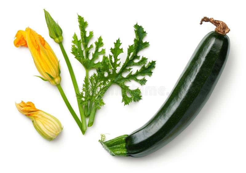 Grön zucchini med bladet och blomman som isoleras på vit bakgrund royaltyfria bilder