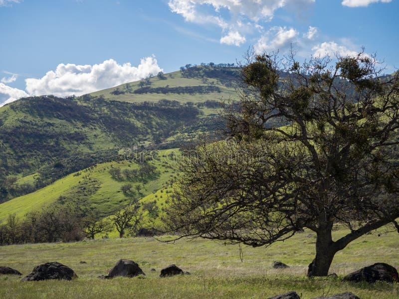 Gröna ängar på berg med ekar royaltyfri bild