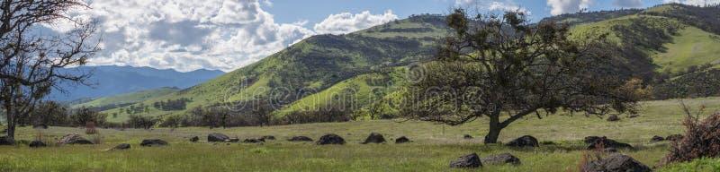 Gröna ängar på berg med ekar royaltyfria bilder