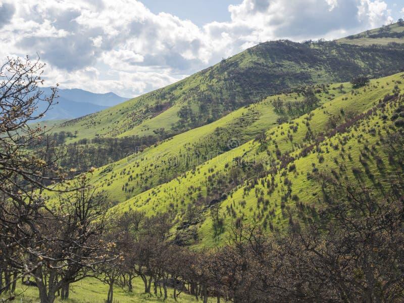 Gröna ängar på berg med ekar arkivbild