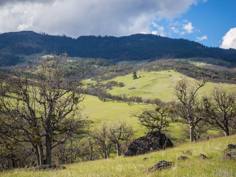 Gröna ängar på berg med ekar royaltyfri foto