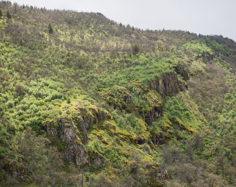 Gröna ängar på berg med ekar royaltyfri fotografi