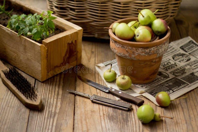 Gröna äpplen i en lerakruka på en träbakgrund royaltyfri fotografi