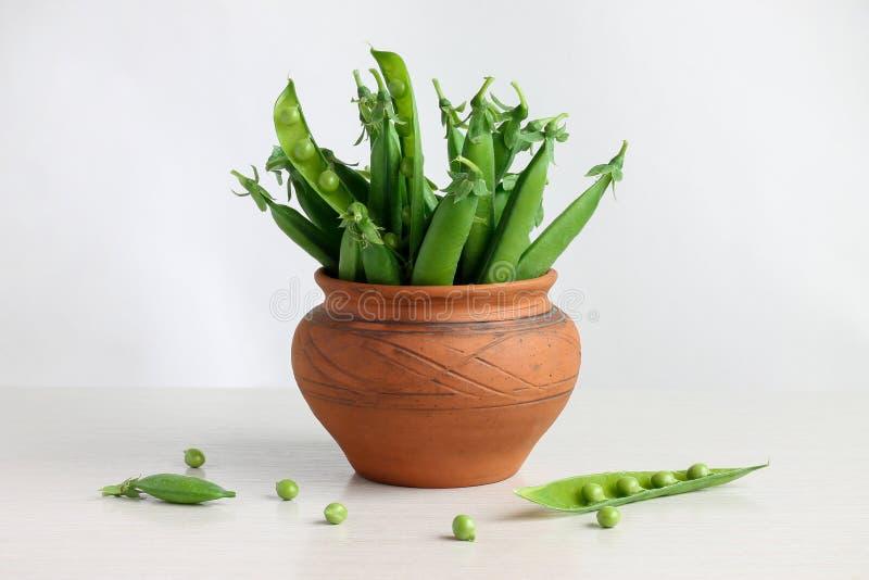 Gröna ärtor i fröskidor i en kruka arkivfoton