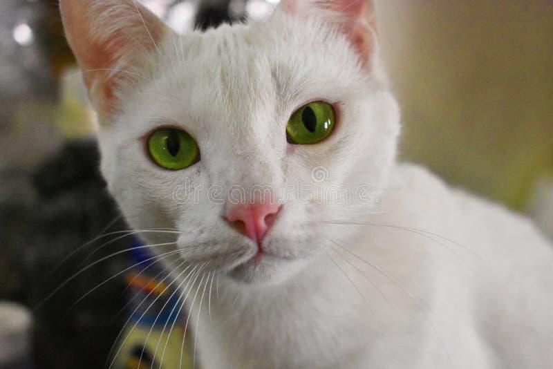 Gröna ögon som håller ögonen på dig arkivfoto