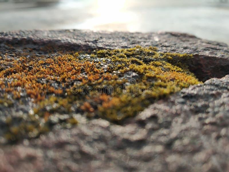 Gröna alger på tegelsten arkivbild