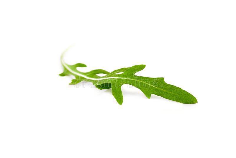 Gröna arugulatjänstledigheter för singel som isoleras på vit bakgrund royaltyfria foton