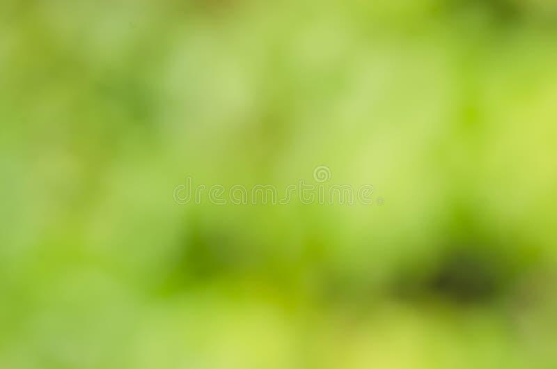 Gröna bakgrunder arkivfoto