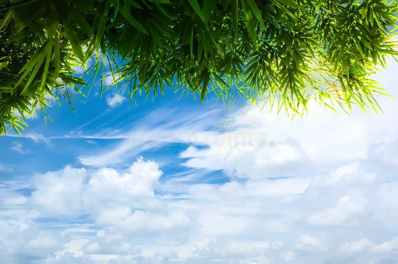 Gröna bambusidor med blå himmel arkivfoton
