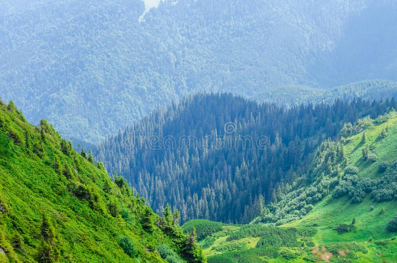 Gröna berg av Ukraina, Carpathians royaltyfri fotografi