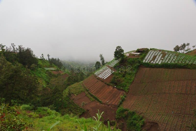 Gröna berg, djungel och asiatiska terrasserade lantgårdar royaltyfri bild