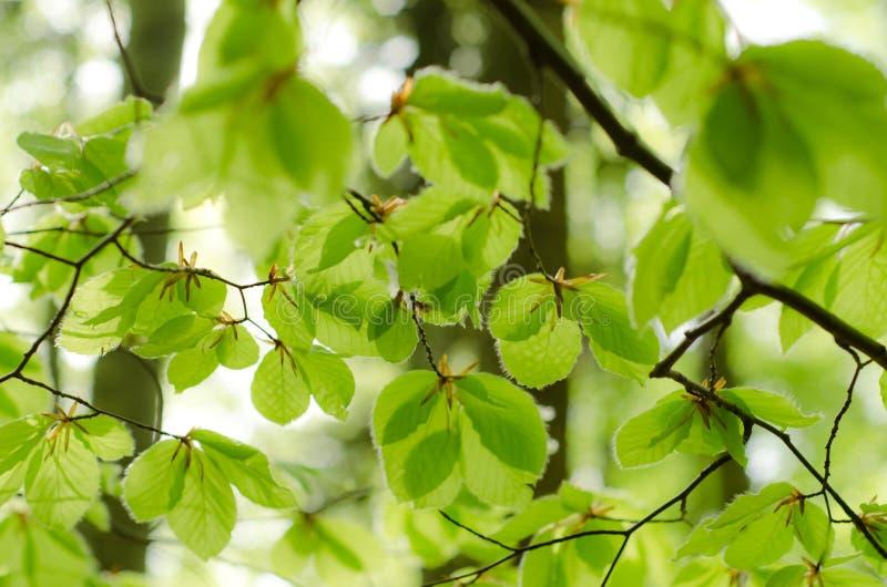 Gröna blad royaltyfria foton